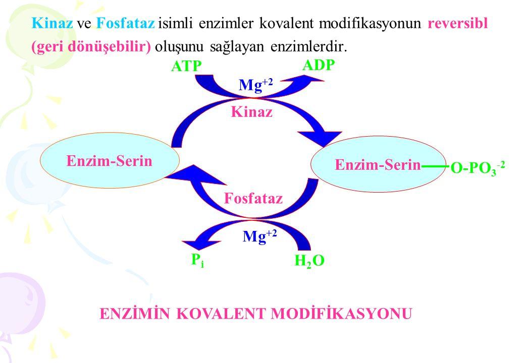 Kinaz ve Fosfataz isimli enzimler kovalent modifikasyonun reversibl (geri dönüşebilir) oluşunu sağlayan enzimlerdir. Enzim-Serin O-PO 3 -2 Kinaz Fosfa
