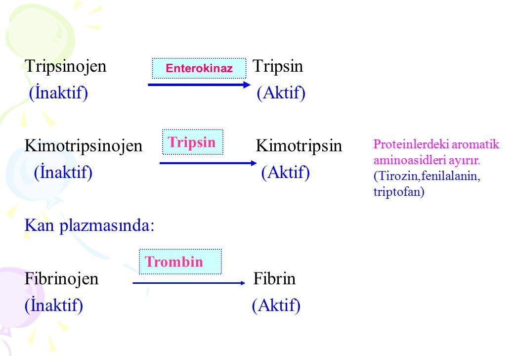 Tripsinojen Tripsin (İnaktif) (Aktif) Kimotripsinojen Kimotripsin (İnaktif) (Aktif) Kan plazmasında: Fibrinojen Fibrin (İnaktif) (Aktif) Enterokinaz T