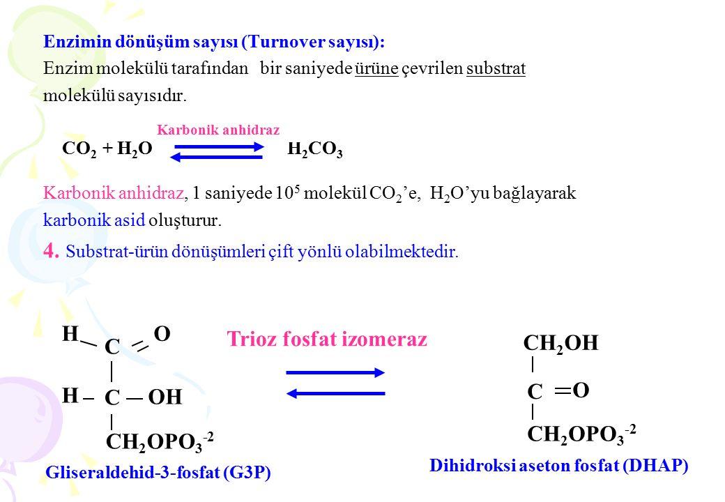 Enzimin dönüşüm sayısı (Turnover sayısı): Enzim molekülü tarafından bir saniyede ürüne çevrilen substrat molekülü sayısıdır. CO 2 + H 2 O H 2 CO 3 Kar