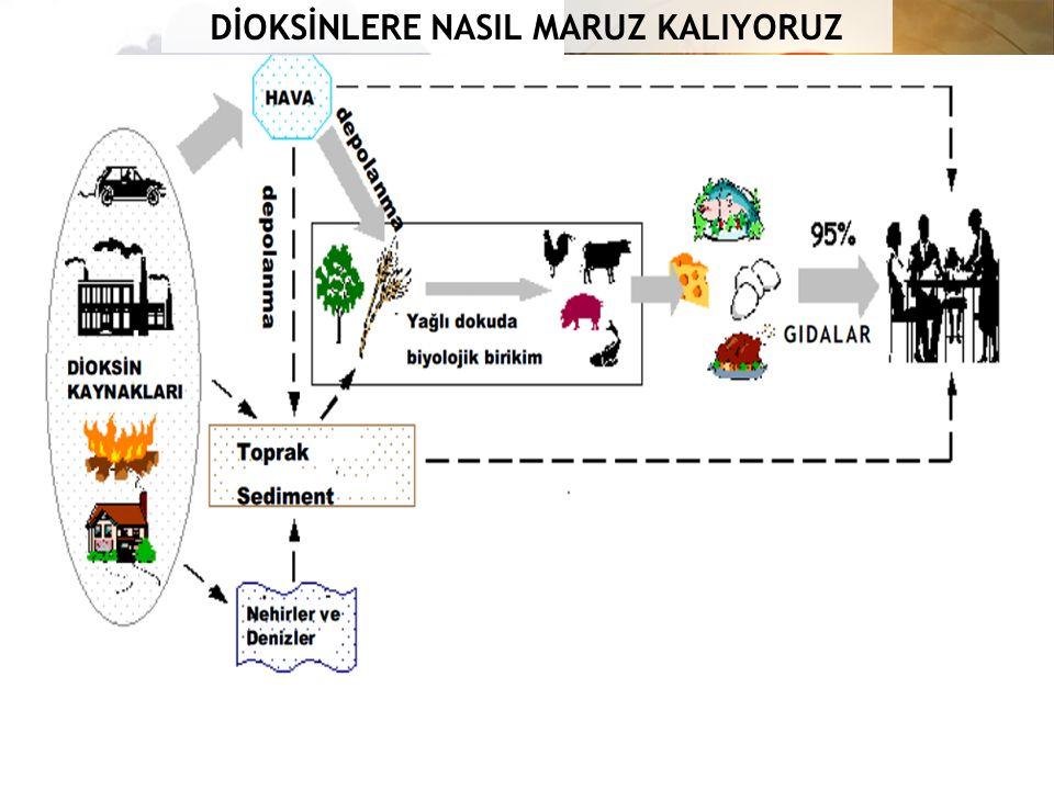 DİOKSİNLERE NASIL MARUZ KALIYORUZ
