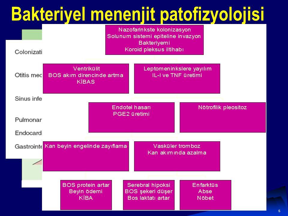 5 Bakteriyel menenjit patofizyolojisi