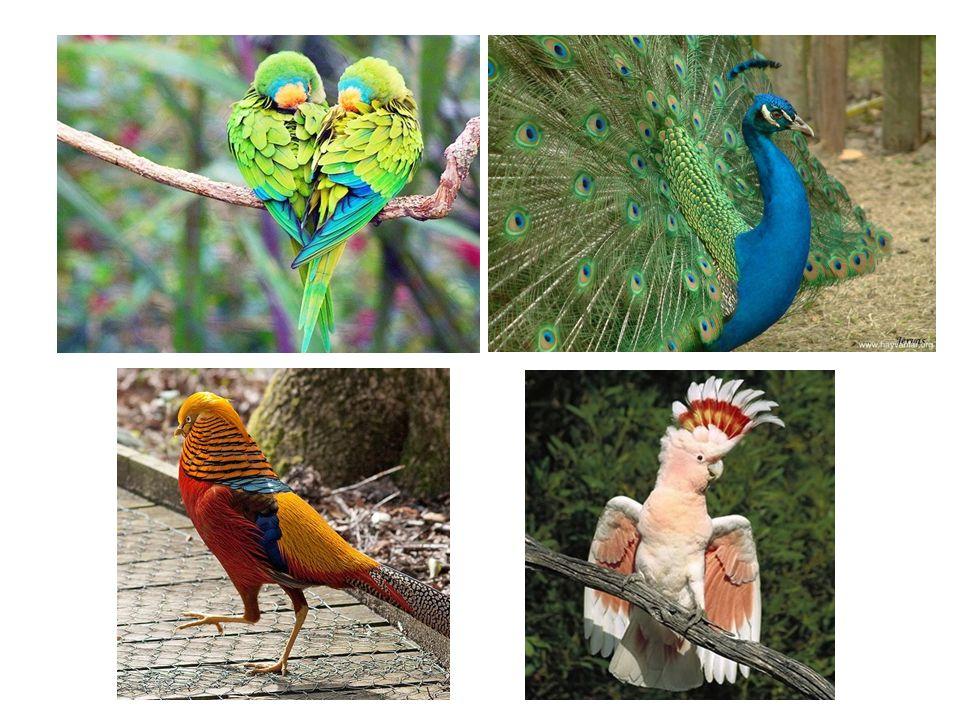 Kuşların en belirgin özelliği diğer hiçbir hayvan grubunda görülmeyen ve deriden orijin alan tüylerin bulunmasıdır.