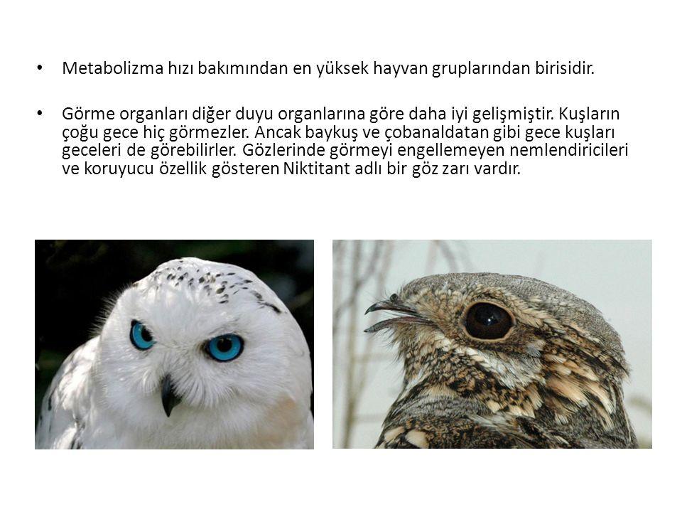 Metabolizma hızı bakımından en yüksek hayvan gruplarından birisidir. Görme organları diğer duyu organlarına göre daha iyi gelişmiştir. Kuşların çoğu g