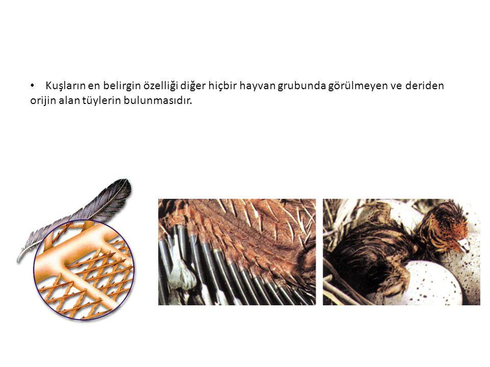 Anadolu Selçuklu Fener Rum Patrikhanesi
