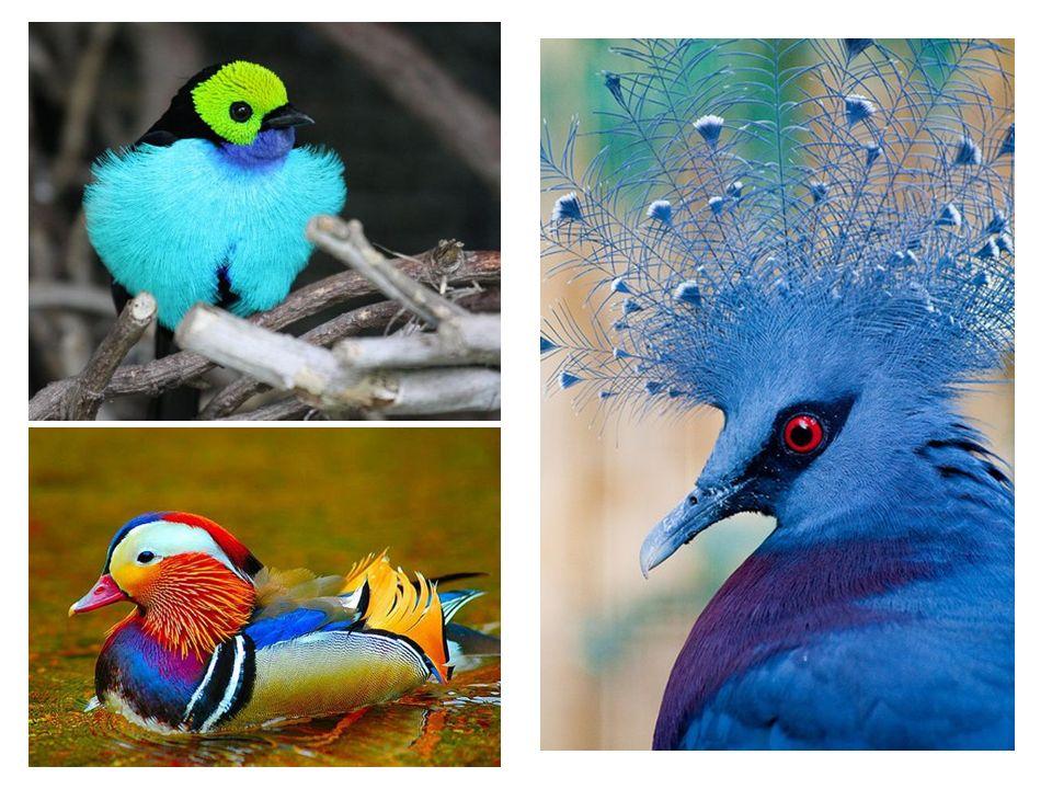 KÜLTÜR VE KUŞLAR Kuşlar 9000'den fazla türle insanlık tarihinin başlangıcından bu yana, insanların ilgisini çeken hayvan grupları arasında daima en ön sıralarda yer almıştır.