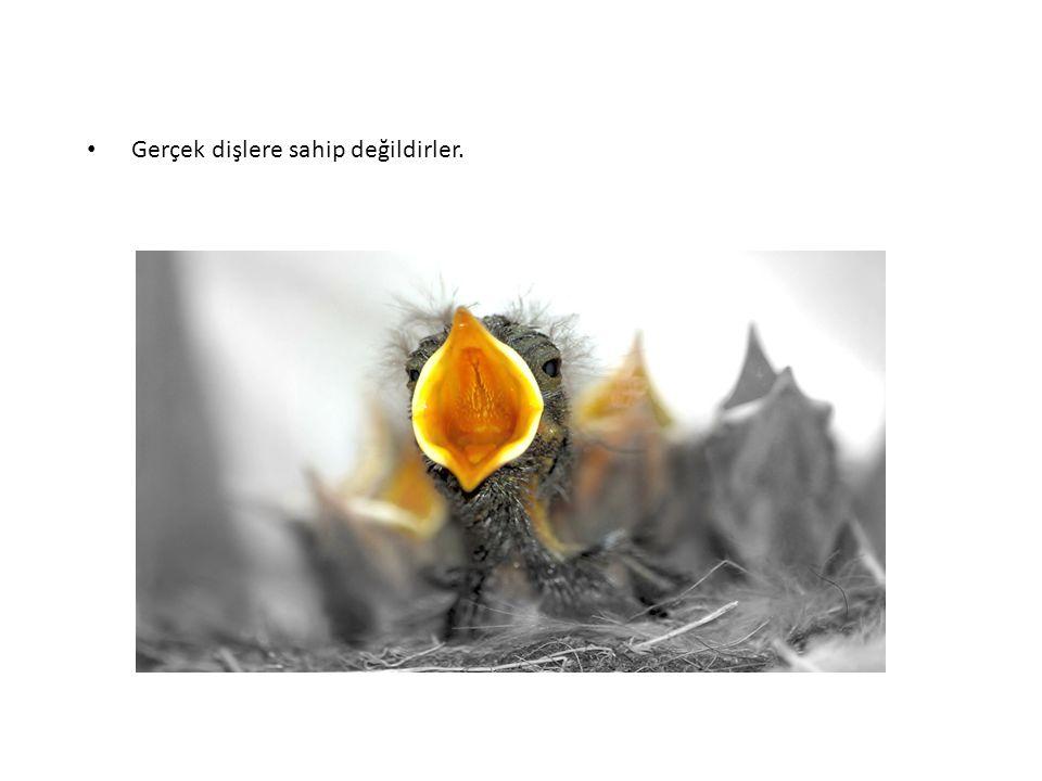 Kuşlar tarih boyunca türküler içinde de kullanılmıştır.