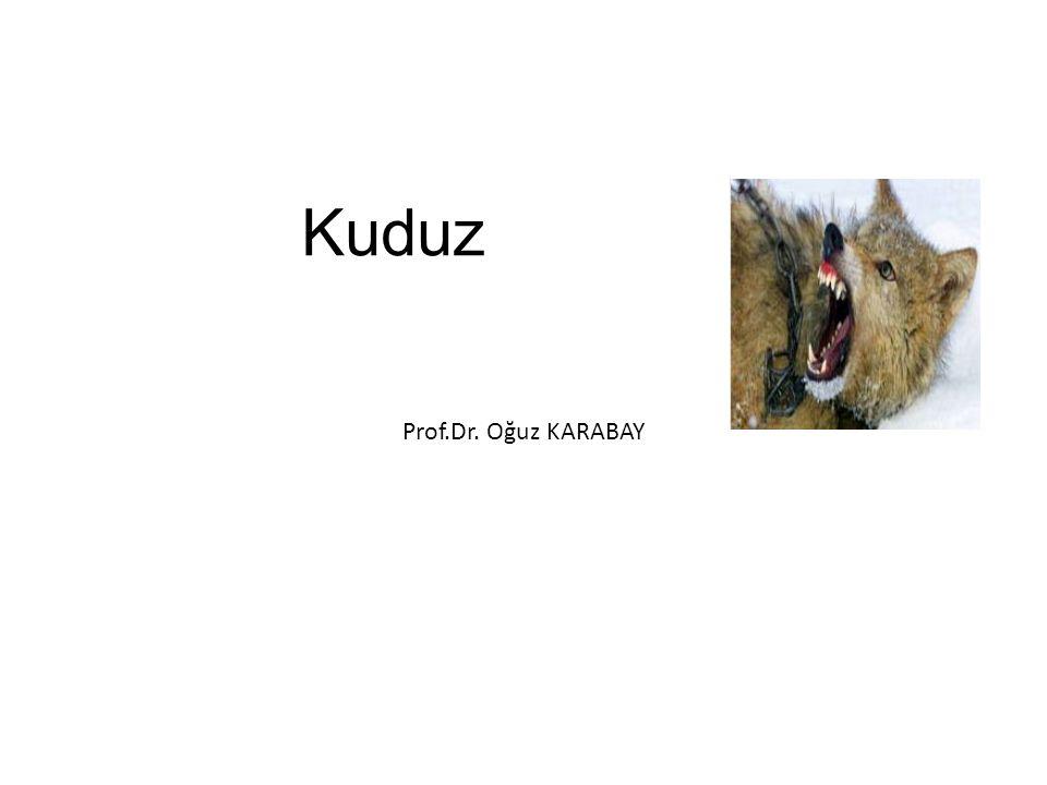 Kuduz Prof.Dr. Oğuz KARABAY