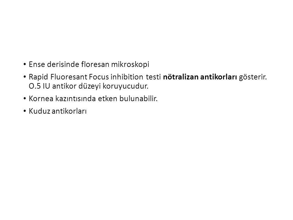 Ense derisinde floresan mikroskopi Rapid Fluoresant Focus inhibition testi nötralizan antikorları gösterir.