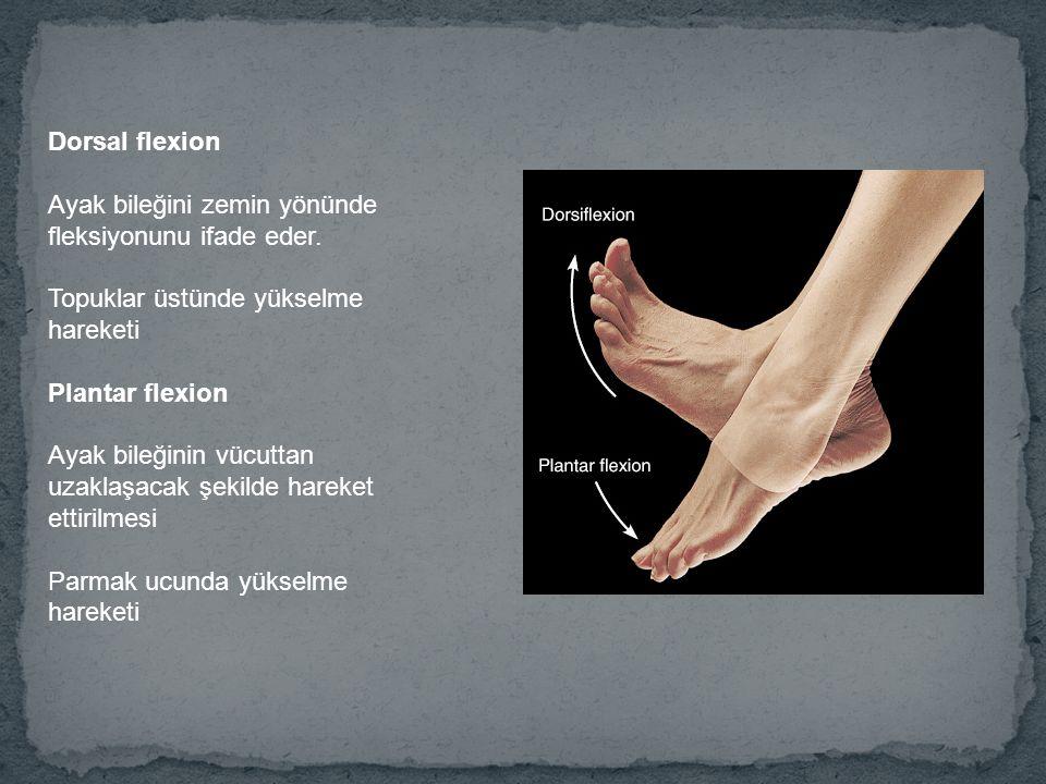 Dorsal flexion Ayak bileğini zemin yönünde fleksiyonunu ifade eder. Topuklar üstünde yükselme hareketi Plantar flexion Ayak bileğinin vücuttan uzaklaş