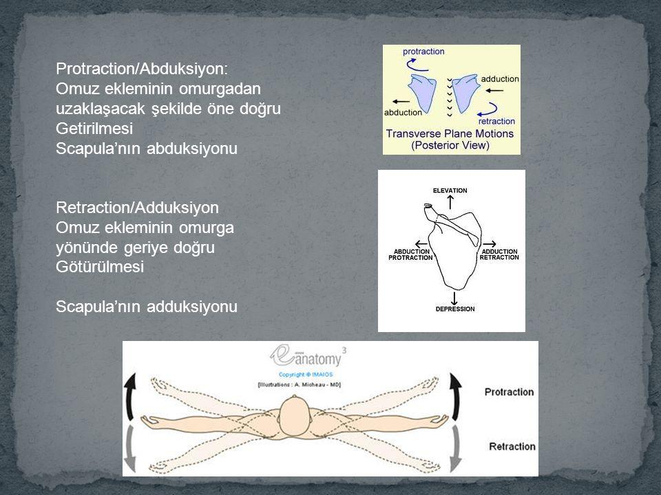 Protraction/Abduksiyon: Omuz ekleminin omurgadan uzaklaşacak şekilde öne doğru Getirilmesi Scapula'nın abduksiyonu Retraction/Adduksiyon Omuz ekleminin omurga yönünde geriye doğru Götürülmesi Scapula'nın adduksiyonu