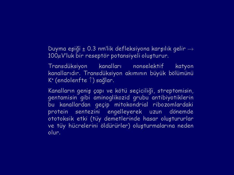 Duyma eşiği ± 0.3 nm'lik defleksiyona karşılık gelir  100  V'luk bir reseptör potansiyeli oluşturur. Transdüksiyon kanalları nonselektif katyon kana