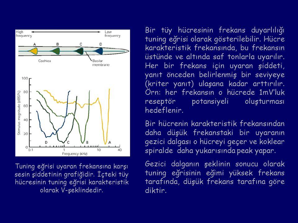 Bir tüy hücresinin frekans duyarlılığı tuning eğrisi olarak gösterilebilir. Hücre karakteristik frekansında, bu frekansın üstünde ve altında saf tonla