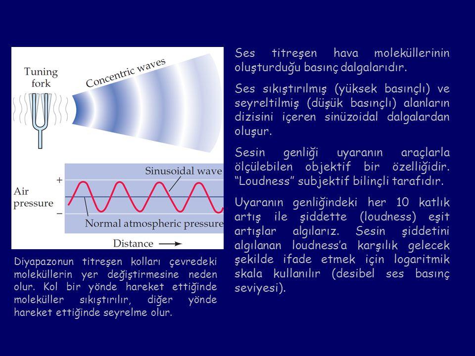 Ses titreşen hava moleküllerinin oluşturduğu basınç dalgalarıdır. Ses sıkıştırılmış (yüksek basınçlı) ve seyreltilmiş (düşük basınçlı) alanların dizis