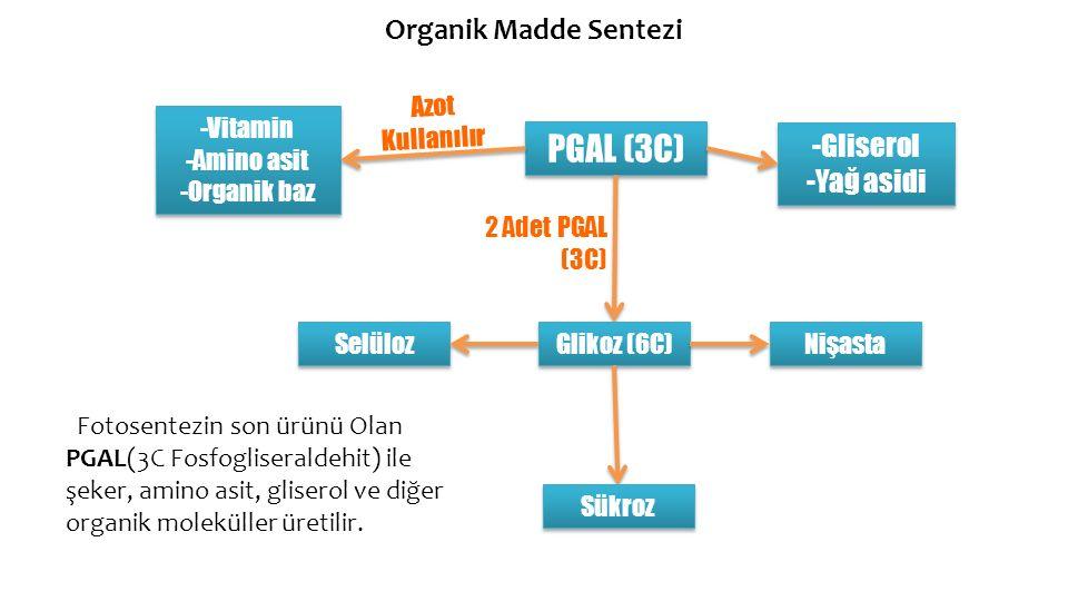 Organik Madde Sentezi Fotosentezin son ürünü Olan PGAL(3C Fosfogliseraldehit) ile şeker, amino asit, gliserol ve diğer organik moleküller üretilir. PG