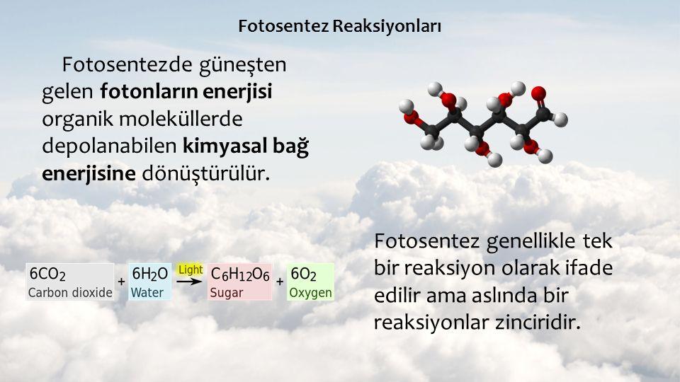 Fotosentez Reaksiyonları Fotosentezde güneşten gelen fotonların enerjisi organik moleküllerde depolanabilen kimyasal bağ enerjisine dönüştürülür. Foto