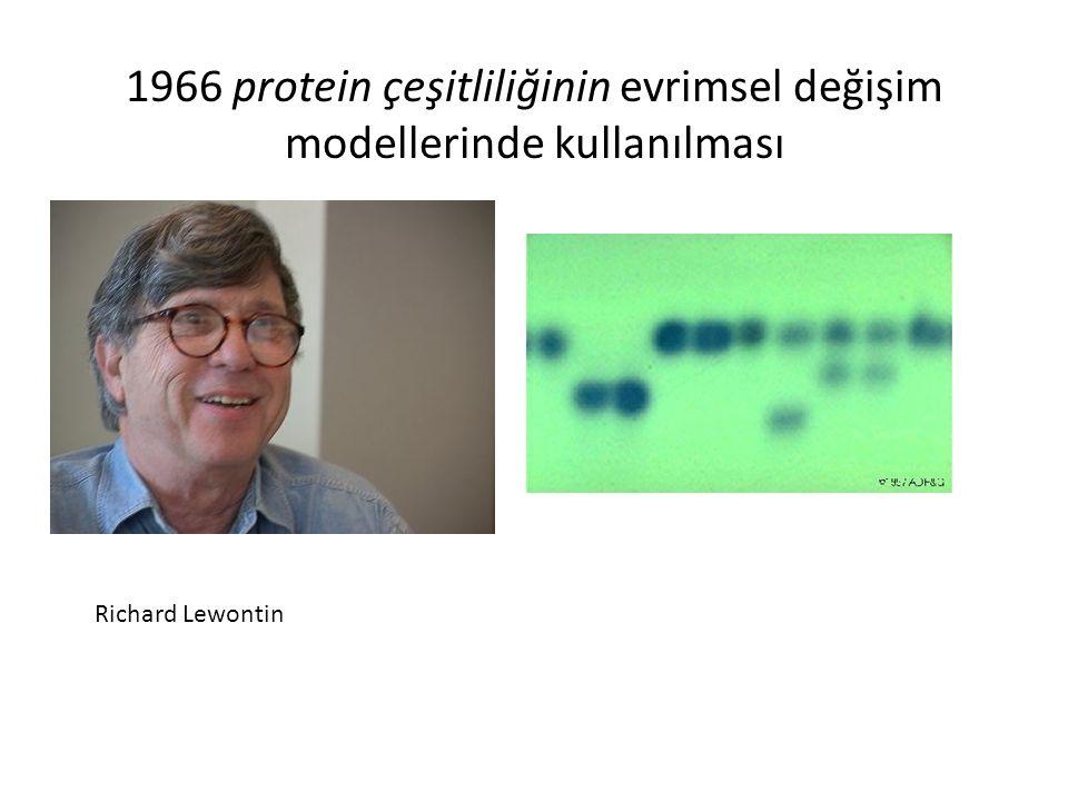 1966 protein çeşitliliğinin evrimsel değişim modellerinde kullanılması Richard Lewontin