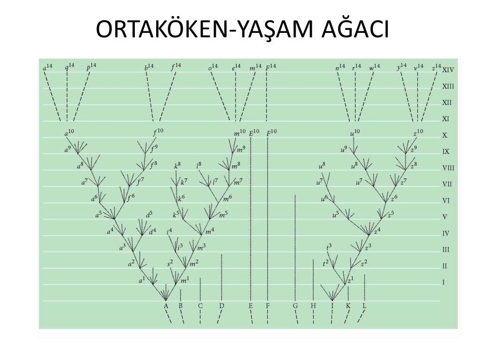 Ortak köken-biyocoğrafya