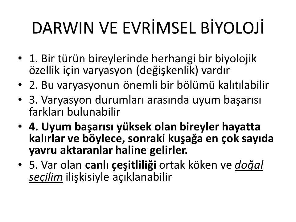 Darwinci evrim