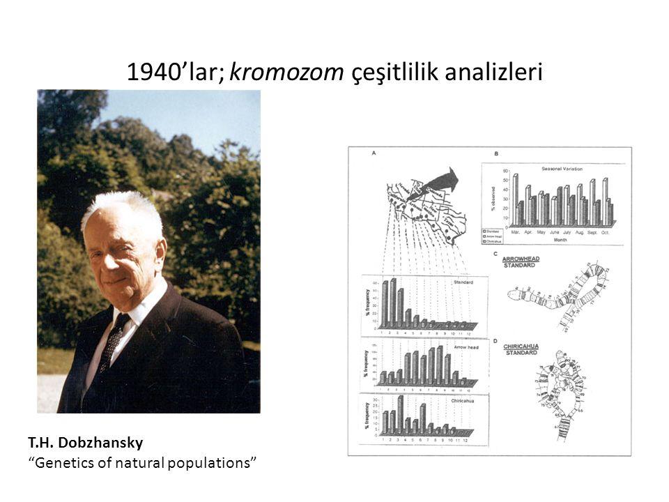 "1940'lar; kromozom çeşitlilik analizleri T.H. Dobzhansky ""Genetics of natural populations"""