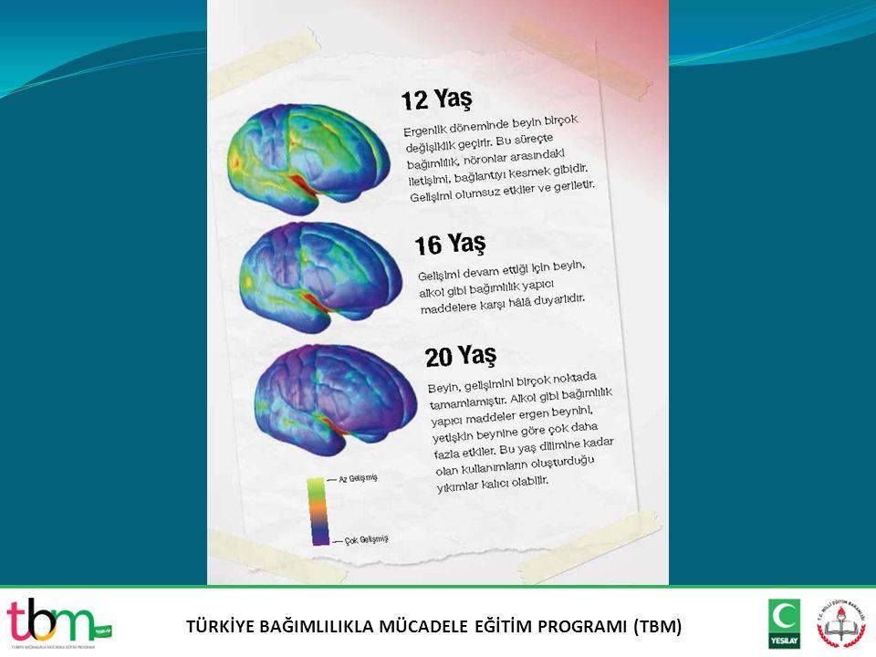 Beyin ve Alkol Bağımlılığı Bağımlılığı anlamada ergen ve yetişkin beynini bilmek neden önemlidir.