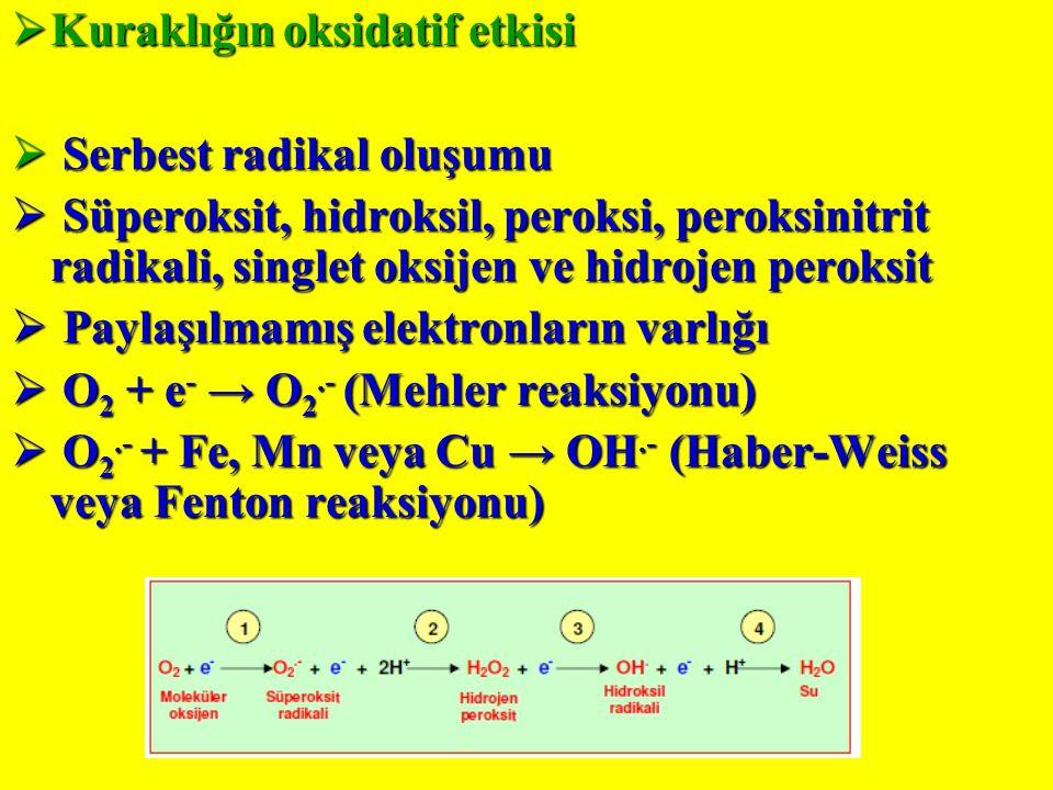  Kuraklığın oksidatif etkisi  Serbest radikal oluşumu  Süperoksit, hidroksil, peroksi, peroksinitrit radikali, singlet oksijen ve hidrojen peroksit  Paylaşılmamış elektronların varlığı  O 2 + e - → O 2.- (Mehler reaksiyonu)  O 2.- + Fe, Mn veya Cu → OH.- (Haber-Weiss veya Fenton reaksiyonu)