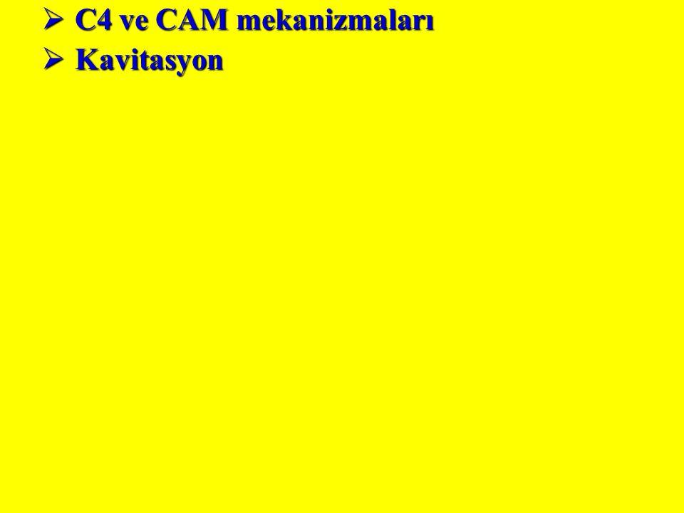  C4 ve CAM mekanizmaları  Kavitasyon