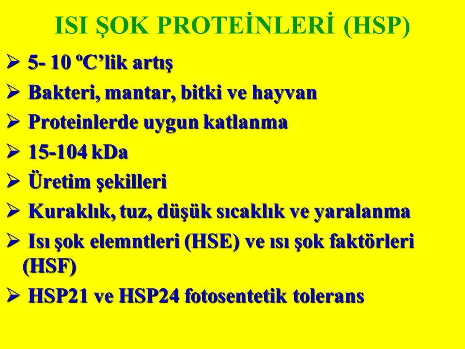ISI ŞOK PROTEİNLERİ (HSP)  5- 10 ºC'lik artış  Bakteri, mantar, bitki ve hayvan  Proteinlerde uygun katlanma  15-104 kDa  Üretim şekilleri  Kuraklık, tuz, düşük sıcaklık ve yaralanma  Isı şok elemntleri (HSE) ve ısı şok faktörleri (HSF)  HSP21 ve HSP24 fotosentetik tolerans