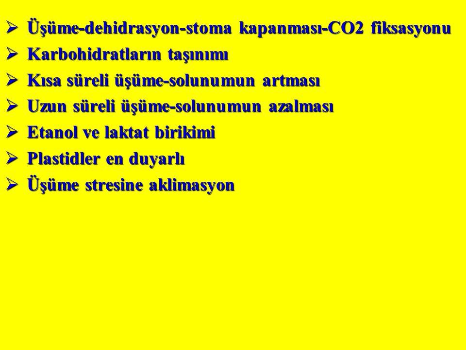  Üşüme-dehidrasyon-stoma kapanması-CO2 fiksasyonu  Karbohidratların taşınımı  Kısa süreli üşüme-solunumun artması  Uzun süreli üşüme-solunumun azalması  Etanol ve laktat birikimi  Plastidler en duyarlı  Üşüme stresine aklimasyon