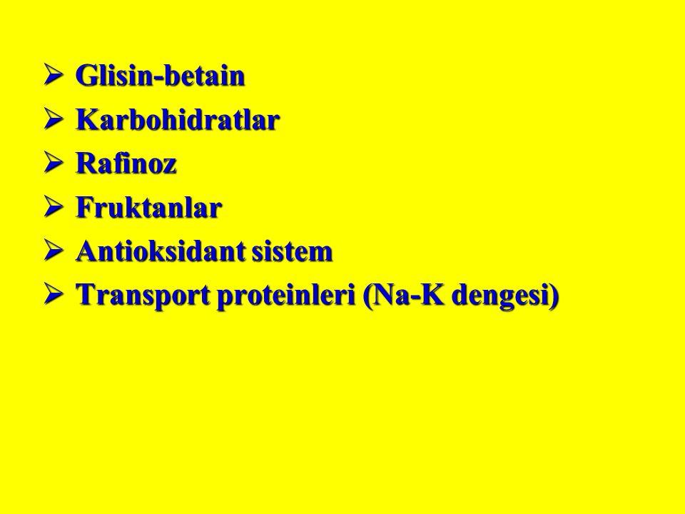  Glisin-betain  Karbohidratlar  Rafinoz  Fruktanlar  Antioksidant sistem  Transport proteinleri (Na-K dengesi)
