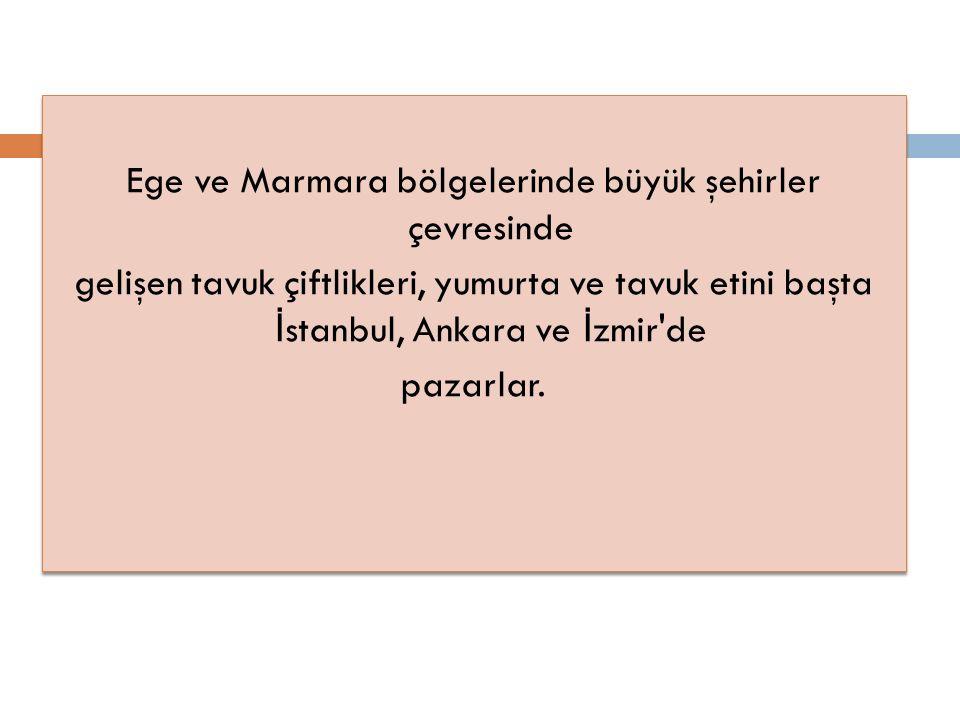 Ege ve Marmara bölgelerinde büyük şehirler çevresinde gelişen tavuk çiftlikleri, yumurta ve tavuk etini başta İ stanbul, Ankara ve İ zmir de pazarlar.