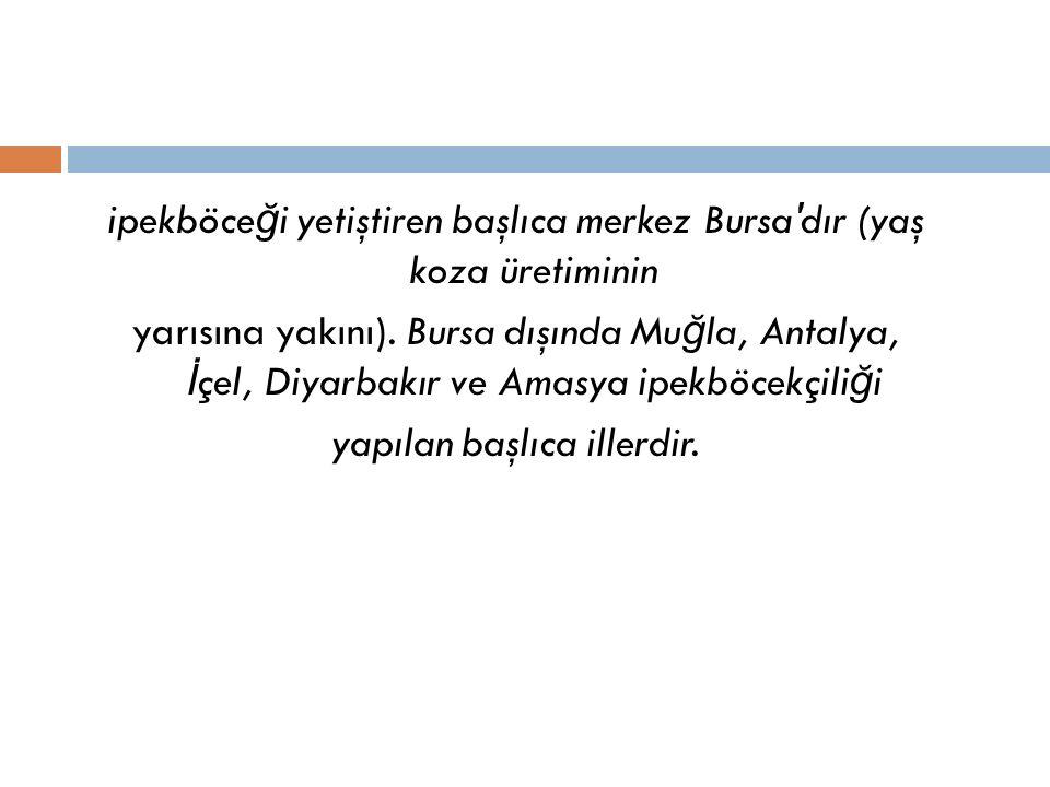 ipekböce ğ i yetiştiren başlıca merkez Bursa dır (yaş koza üretiminin yarısına yakını).