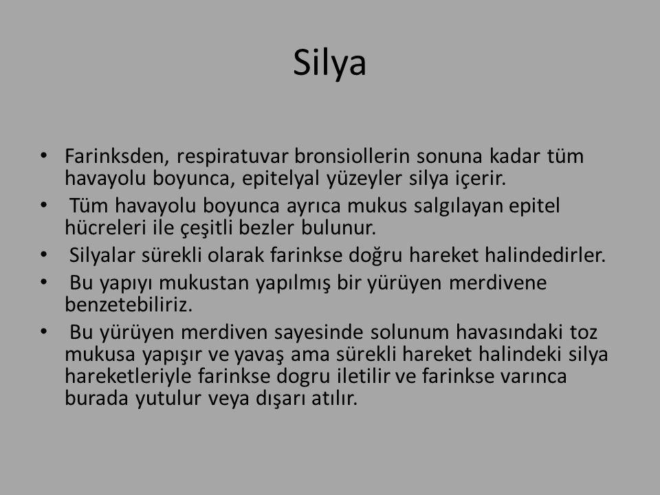 Silya Farinksden, respiratuvar bronsiollerin sonuna kadar tüm havayolu boyunca, epitelyal yüzeyler silya içerir. Tüm havayolu boyunca ayrıca mukus sal