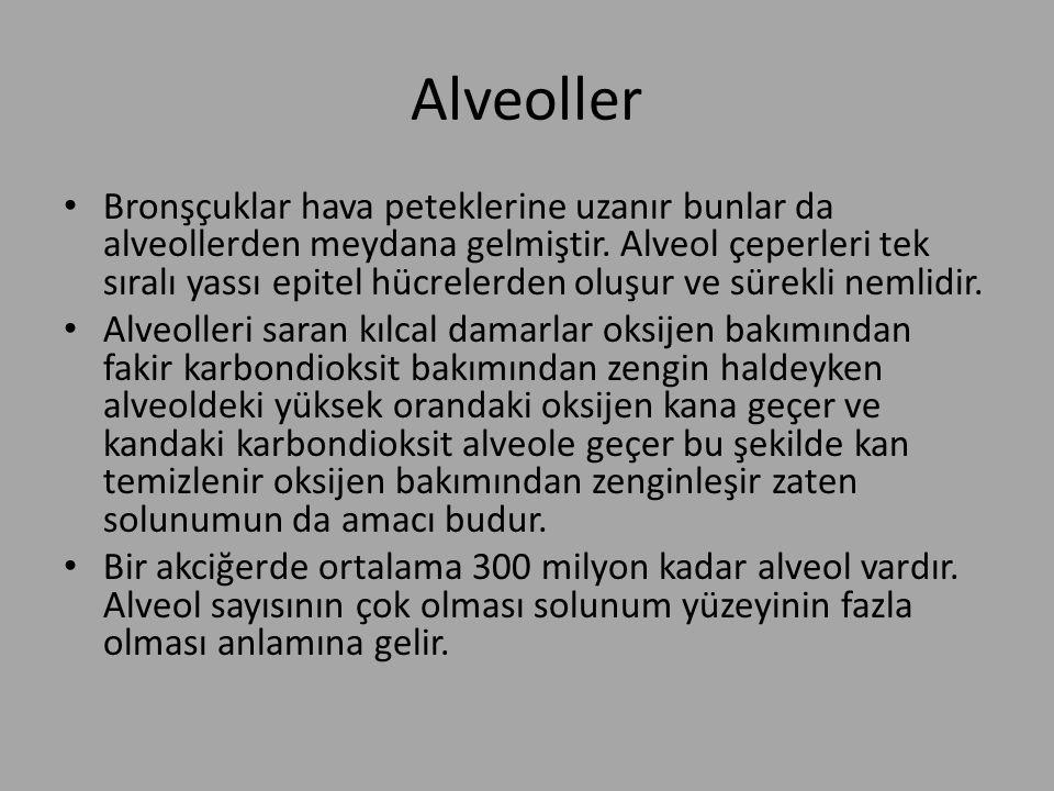 Alveoller Bronşçuklar hava peteklerine uzanır bunlar da alveollerden meydana gelmiştir. Alveol çeperleri tek sıralı yassı epitel hücrelerden oluşur ve
