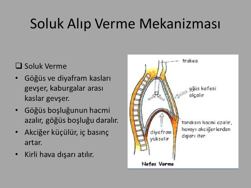 Soluk Alıp Verme Mekanizması  Soluk Verme Göğüs ve diyafram kasları gevşer, kaburgalar arası kaslar gevşer. Göğüs boşluğunun hacmi azalır, göğüs boşl