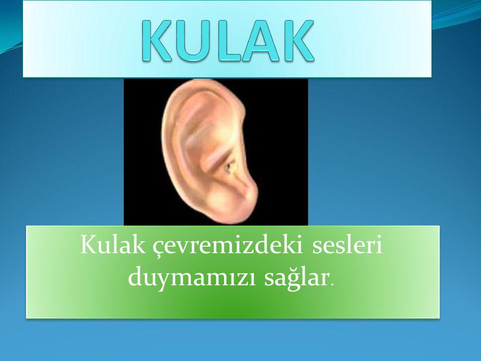 KULAK SAĞLIĞIMIZ İÇİN; Kulaklarımızı temiz tutmalıyız.