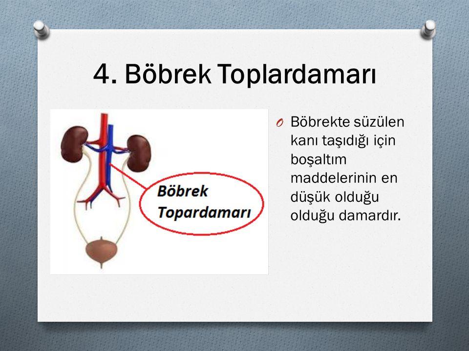 4. Böbrek Toplardamarı O Böbrekte süzülen kanı taşıdığı için boşaltım maddelerinin en düşük olduğu olduğu damardır.