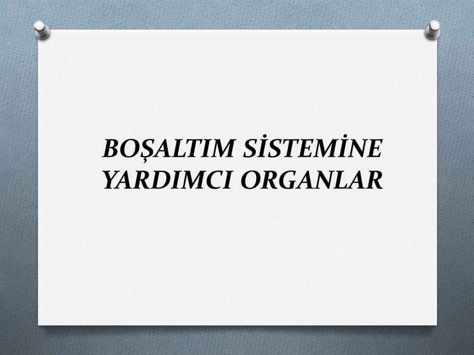 BOŞALTIM SİSTEMİNE YARDIMCI ORGANLAR