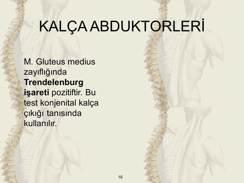 16 M. Gluteus medius zayıflığında Trendelenburg işareti pozitiftir. Bu test konjenital kalça çıkığı tanısında kullanılır. KALÇA ABDUKTORLERİ
