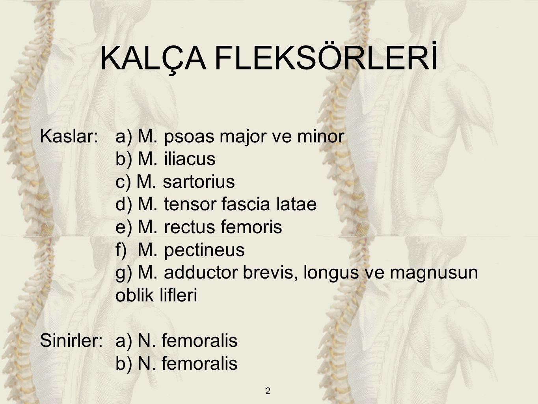 2 Kaslar: a) M. psoas major ve minor b) M. iliacus c) M. sartorius d) M. tensor fascia latae e) M. rectus femoris f) M. pectineus g) M. adductor brevi