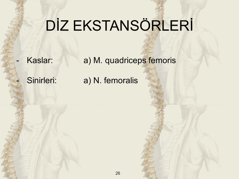26 DİZ EKSTANSÖRLERİ -Kaslar: a) M. quadriceps femoris -Sinirleri:a) N. femoralis