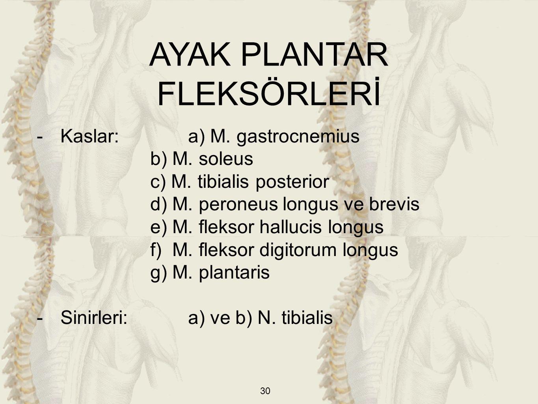30 AYAK PLANTAR FLEKSÖRLERİ -Kaslar: a) M. gastrocnemius b) M. soleus c) M. tibialis posterior d) M. peroneus longus ve brevis e) M. fleksor hallucis