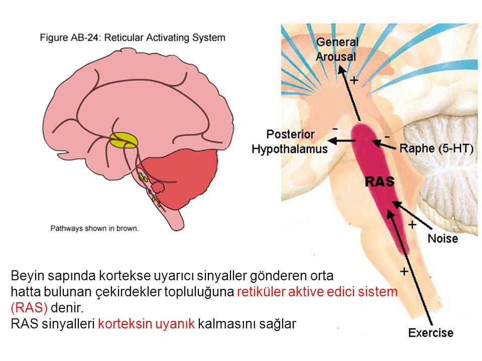 Beyin sapında kortekse uyarıcı sinyaller gönderen orta hatta bulunan çekirdekler topluluğuna retiküler aktive edici sistem (RAS) denir.