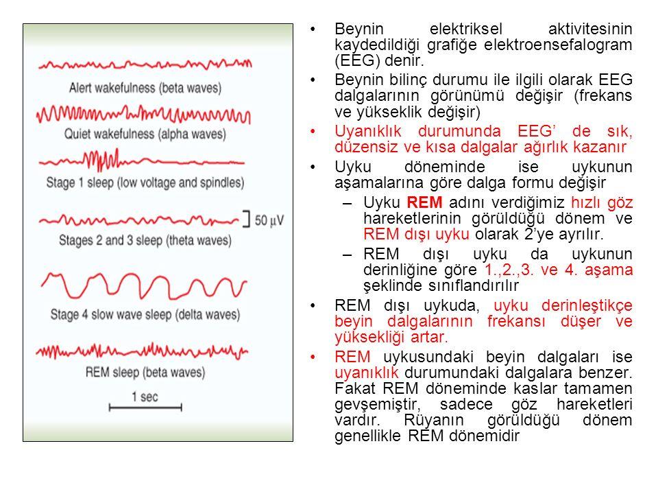 Beynin elektriksel aktivitesinin kaydedildiği grafiğe elektroensefalogram (EEG) denir.