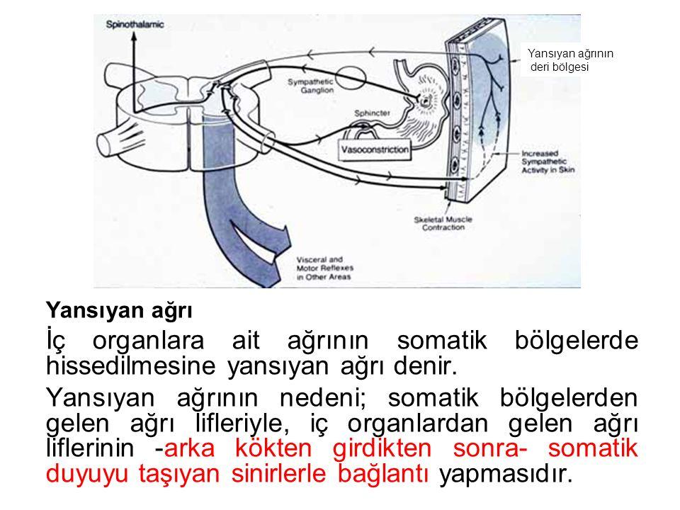 Yansıyan ağrı İç organlara ait ağrının somatik bölgelerde hissedilmesine yansıyan ağrı denir.
