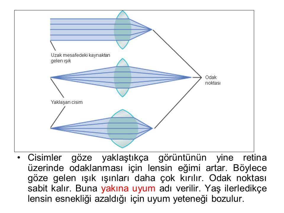 Cisimler göze yaklaştıkça görüntünün yine retina üzerinde odaklanması için lensin eğimi artar.