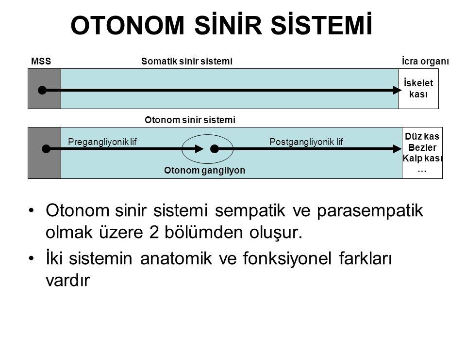 OTONOM SİNİR SİSTEMİ Otonom sinir sistemi sempatik ve parasempatik olmak üzere 2 bölümden oluşur.