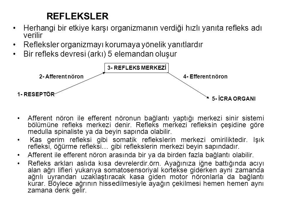 REFLEKSLER Herhangi bir etkiye karşı organizmanın verdiği hızlı yanıta refleks adı verilir Refleksler organizmayı korumaya yönelik yanıtlardır Bir refleks devresi (arkı) 5 elemandan oluşur Afferent nöron ile efferent nöronun bağlantı yaptığı merkezi sinir sistemi bölümüne refleks merkezi denir.