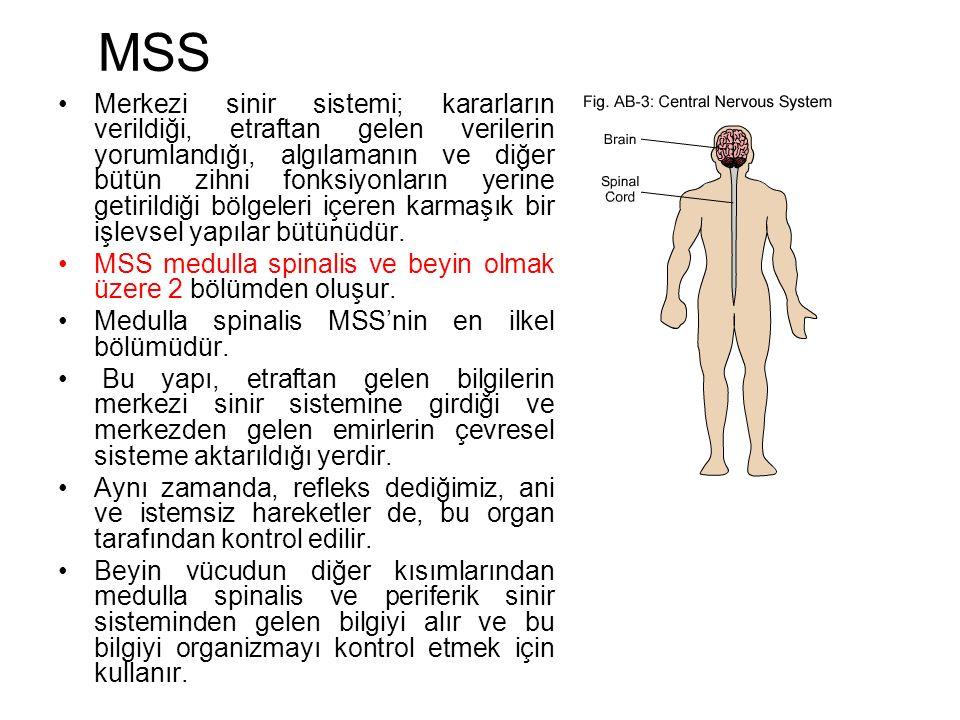 MSS Merkezi sinir sistemi; kararların verildiği, etraftan gelen verilerin yorumlandığı, algılamanın ve diğer bütün zihni fonksiyonların yerine getirildiği bölgeleri içeren karmaşık bir işlevsel yapılar bütünüdür.