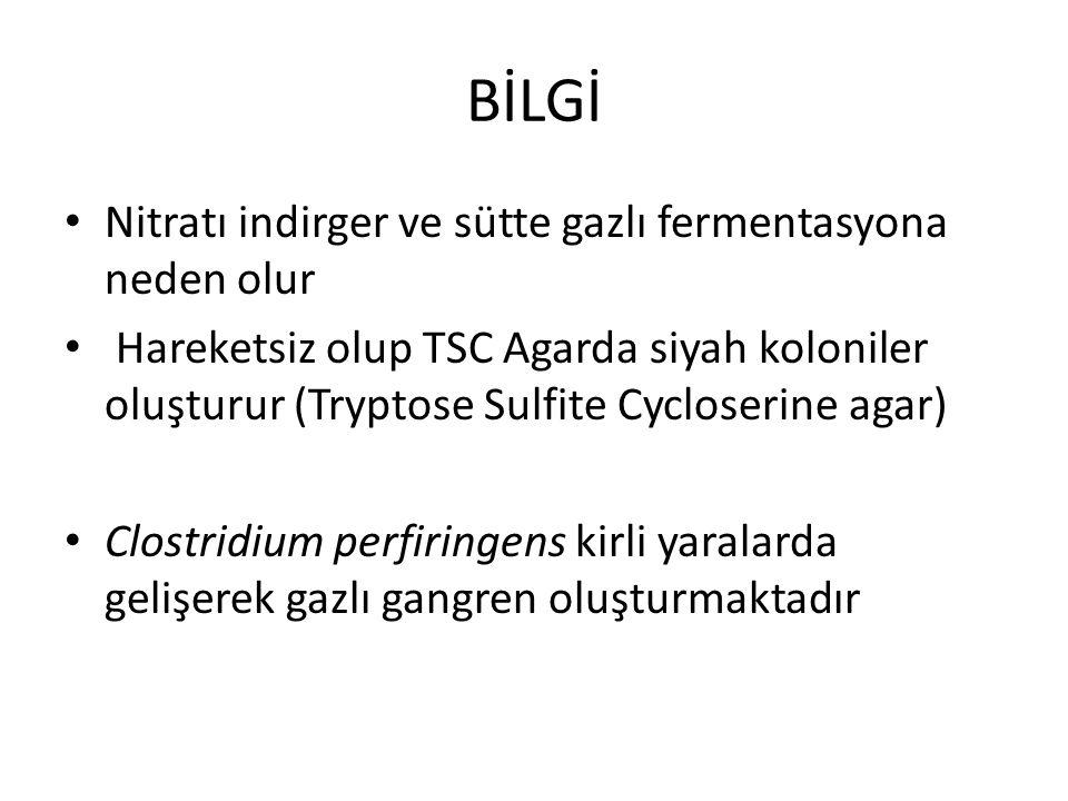 BİLGİ Nitratı indirger ve sütte gazlı fermentasyona neden olur Hareketsiz olup TSC Agarda siyah koloniler oluşturur (Tryptose Sulfite Cycloserine agar
