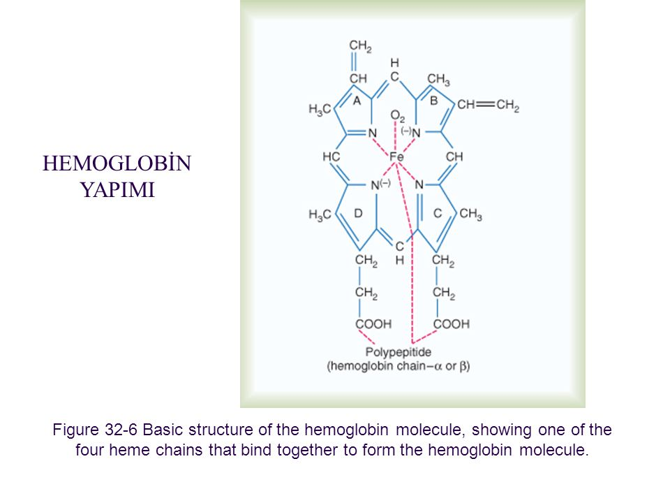 Figure 32-6 Basic structure of the hemoglobin molecule, showing one of the four heme chains that bind together to form the hemoglobin molecule. Downlo